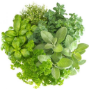 Fresh Herbs now available!